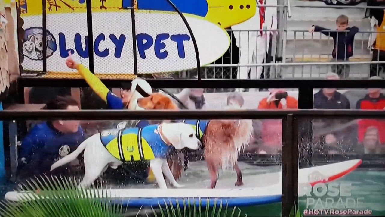 Al Roker Couldn't Get Enough Of The Surfing Dogs In The Rose Parade