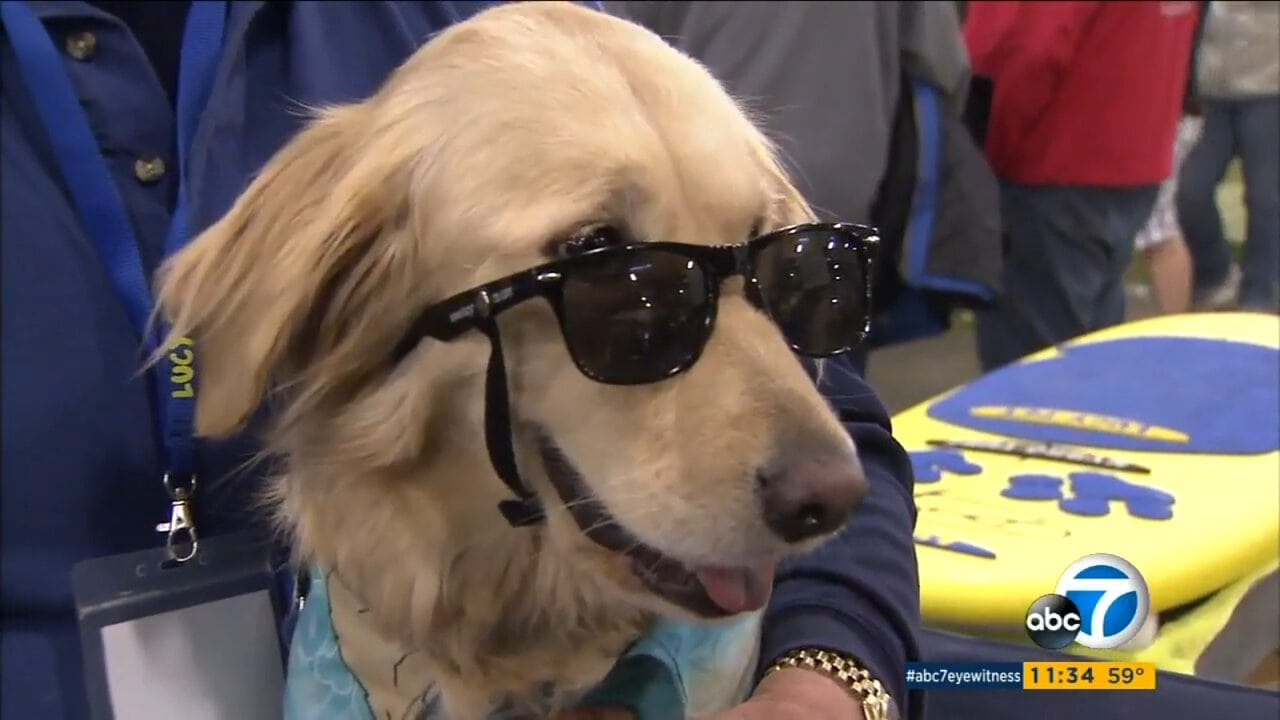 Rose Parade Float Featuring Surfing Dogs Sets World Record
