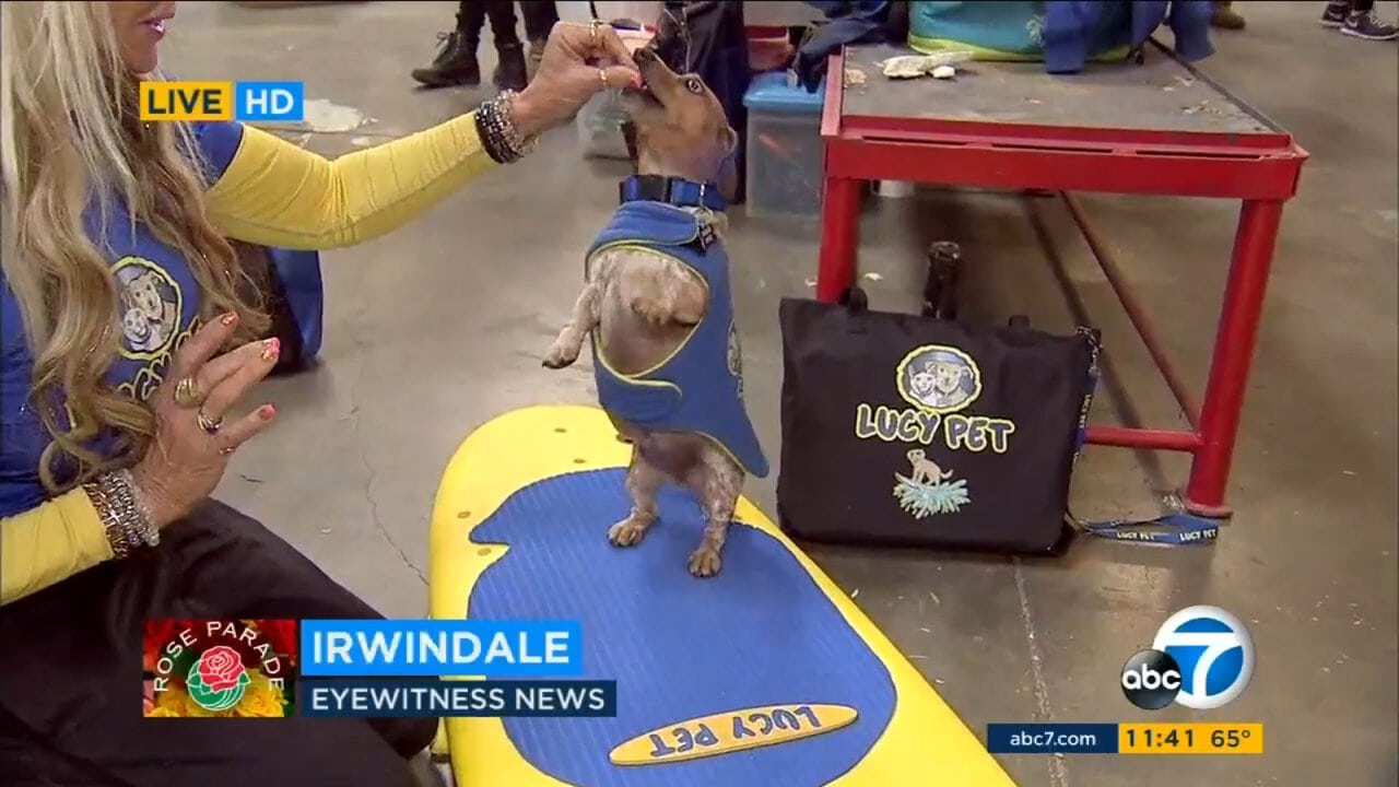 Rose Parade Floats Range From Surfing Dogs To Orlando Memorial